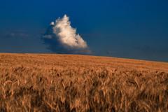 Elements (Stefania Pascucci) Tags: nuvola cielo oro