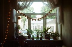 Film XXV : 2016 (Paula Zaria) Tags: zenit analog 35mm photo photography oldschool garland plants birthday sill window curtains