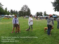 DAT2016_Crowd_1073 (greytoes_99) Tags: agility cat dat2015 dat2016 event humanesocietytacoma people summer tacoma tacomahs volunteers dog humananimalbond lakewood wa us