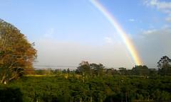 Paisaje con arcoris 1/ Landscape with Rainbow 1 (vantcj1) Tags: naturaleza paisaje cielo nubes arcoiris vegetacin cafetal rboles cableado