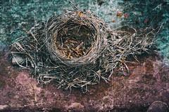 empty nest (Jude Marion) Tags: ontario canada nest oldcar birdsnest wrecks rockwood oldwrecks mcleansautowreckers