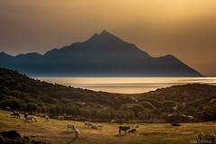 Sitonia morning () Tags: morning light sea holiday water beauty sunshine canon photography cow spring cows aegean greece athos halkidiki sithonia aegeansea sarti mtathos