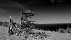Scorched DSL9179 (iloleo) Tags: landscape capebreton novascotia canada skyline atlantic bw mono filter hss nature nikond7000 summer tree spruce