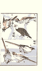 Top  black bulbul and brown-eared bulbul; Bottom  wagtail (Japanese Flower and Bird Art) Tags: black bird art japan japanese book picture hokusai woodblock wagtail katsushika bulbul leucocephalus ukiyo motacilla motacillidae browneared ixos pycnonotidae amaurotis hypsipetes readercollection