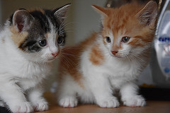 Little Kittens (Glenn Pye) Tags: kitten kittens cats cat nature wildlife nikon nikond7200 d7200