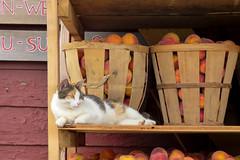 Cozy (Alemap.1) Tags: closeup cat animal portrait fruit store