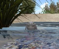 Hello, little friend. ( Chucste  [The Cradle Of Filth]) Tags: secondlife sl virtual virtualworld ozimal ozimals bunny littleone bunneh