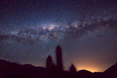 The Milky Way at Valle de Elqui, Chile (Luis Prez Corts) Tags: milkyway universe star cactus night astrophotography galaxy longexposure nightlight astronomy astros cosmos chile tokina1116mm sonya58