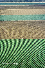 SALINAS, CALIFORNIA - Salinas Valley fields (Remsberg Photos) Tags: california usa green landscape pattern farm farming salinas rows fields crops agriculture horticulture salinasvalley
