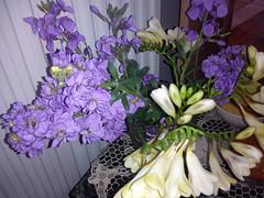 ... !  DSC03719 (amalia_mar) Tags: flowers white spring purple vase viola   fressia    sonyericssone10i     aigioachaiagreece