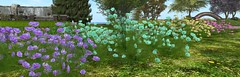 Two Cosmo plants packs, 45L each, at Two Moon Gardens (Two Moon Gardens (Avi Choice Award Winners 2015)) Tags: summer plant flower tree nature butterfly garden store spring bush landscaping romance sl offer secondlife virtualreality romantic shrub cosmo ll ferndale springsummergarden springsummer gardencentre springgarden gardencenter lindenlab virtualworld summergarden virtualenvironment naturesounds cosmoplant twomoongardens bunniebadger gardeninsecondlife instantlandscaping cosmoplants