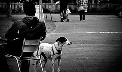Waiting for a bone ! (CJS*64) Tags: people bw dog monochrome animal mono blackwhite nikon waiting lytham wait sat nikkor lead stannes nikkorlens onalead 18mm105mmlens nikond3100 cjs64
