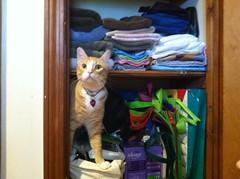 IMG_5881 (moonfever0) Tags: cat closet dimitri iphone 2014
