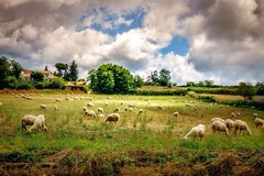 ITALY- The Land God Painted (Mickey Katz) Tags: county travel vacation sky italy beautiful beauty clouds countryside photo amazing europe italia outdoor farm awesome culture dramatic tourist herd breathtaking bestshot supershot flickrsbest amazingphoto abigfave anawesomeshot flickrlovers
