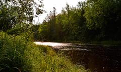 Morning Sun Over Musquodoboit River (TheNovaScotian1991) Tags: trees sun canada water grass river novascotia kitlens easternshore 1855mm goldenhour provincialpark morningsun waterreflections musquodoboit nikond3200