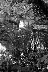 Reflections ii. (hanneamunda) Tags: blackwhite river oslo norway pentax k1000 ilford ilfordhp5 trees leaves reflection film filmphotography analog nature 35mm