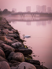 Mysterious morning (Andris Nikolajevs) Tags: morning bridge fog copenhagen canal swan rocks foggy cit