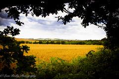 QECP Summer 2016-9 (broadswordcallingdannyboy) Tags: hampshire southdowns qecp summer southdownsnationalpark landscape leonreillyphotography fields englandlandscape colour summer2016 eos7d canon 24mm leonreilly copyrightleonreillyphotography donotcopy