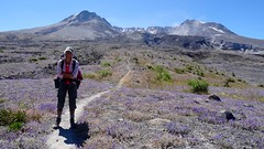 Mt St Helens Loop (Washington, August 2016) - 83 (threeleggeddog) Tags: hiking backpacking tecla bruno teclaris brunorijsman mtsthelens mountsainthelens sthelens volcano