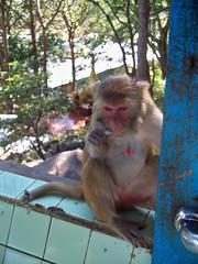 Mt._Popa_Bagan (9) (Sasha India) Tags: bagan pagan myanmar burma travel journey 旅行 緬甸 ミャンマー 미얀마 ταξίδι μιανμάρ баган паган мьянма бирма путешествие путешествия подорожі подорож мандри การท่องเที่ยว พม่า பயண மியான்மார் ভ্রমণ মায়ানমার سفر ميانمار