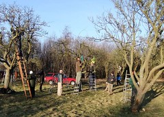 Orchard Pruning Day