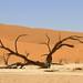 Sossusvlei National Park Namibia 13