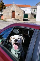 Ice the Dog in Penela da Beira (Gail at Large | Image Legacy) Tags: portugal 2015 gailatlargecom amendoeirasemflor peneladabeira icethedog amendoeirasemflor2015