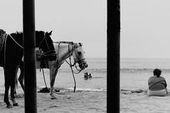 (bisonte invencible) Tags: blackandwhite horse blancoynegro beach caballo playa perú canonae1 ilfordfp4 máncora