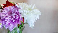 Flowers' Light (menna R) Tags: light red roses white flower green rose purple vase bouquet dahlias