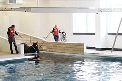 Equine Swimming