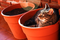 Soy marplatense Tomo sol (Laura__0000) Tags: world life city friends red wild favorite pet naturaleza color cute nature argentina colors animal animals cat canon fun photography togetherness town photo buenosaires kitten feline colorful colours friendship shot natural image wildlife vivid lifestyle ciudad colores explore gato felino destination faves pblico animales gatitos popular exploration mycat animalplanet mascota sunbathing connection bonding gggg locations mardelplata noble fotografa publico documenting privado fotografaencolor locaciones costaatlantica colorimage tomarsol colorshot popularfaves imagenencolor marplatense amonganimals tigerpajerli