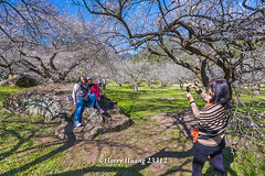 Harry_23312,,,,,,,,,,,,,,,,,,,,Plum,Plum Tree,Tree,Fruit,Farm (HarryTaiwan) Tags: tree fruit nikon farm plum taiwan     plumtree  d800                    harryhuang  hgf78354ms35hinetnet adobergb