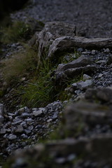 _DSC7876 (Parrasgo) Tags: sea costa streetart feet beach trekking mar playa cliffs tango napoli amalfi dei sendero grotta npoles abandonned degli azulejos farmacia abandonado incurabili bagnoli seiano sintiero tilsts