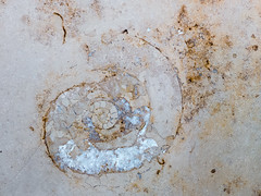 "Ammonit_20160703 (""Besenbinder"") Tags: versteinerung ammonit jura fossil palontologie ammonshorn natur nature natura naturaleza natureza stein stone pierre pietra pedra piedra geotagged europe"