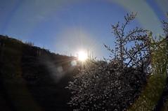 Beautiful lens flare with Apricot Blossom (Furqan LW) Tags: nagarvalley hunzavalley gilgit pakistan landscape nature naturephotography blossom bloosom night sunset longexposure sundown
