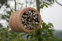 ckuchem-2931 (christine_kuchem) Tags: dose hilfe insekten insektenhotel insektennisthilfen insektenschutz naturschutz nisthilfen rohr schutz stengel selbstgemacht