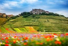 Flowers and colors in Castelluccio (Lightning diciotto) Tags: castelluccio alexproimageandvision flowers landscape perugia italy color bokeh zeiss85mmf14za