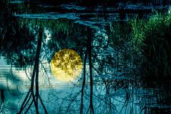 Atardecer en la charca (seguicollar) Tags: virginiasegu water agua ro estanque charca reflejos rboles tree ramas plantas vegetales sol imagencreativa photomanipulacin arte artedigital artecreativo paisaje landascape