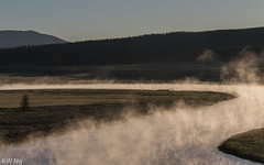 YellowStone-9559.jpg (ngkaiwa) Tags: yellowstone yellowstonepark