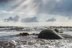 Rock in Water (David Allan Barker) Tags: clouds light ocean rays rock scotland sea seaweed sky sunshine water waves