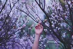 someday I will reach you* (Wolf's kurai) Tags: canon wolfskurai melancholy portrait hands ume flowers trees purple