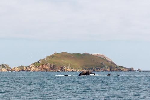 L'île Rouzic, Archipel des Sept-Îles
