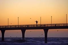 Life on the edge! (mpp26) Tags: ocean life light sea newzealand christchurch sunrise pier risk gulls edge railing taking newbrightonpier