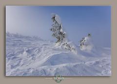 20090110_095653_RS-Edit (FotoKreator Robert Szczachor) Tags: zima korbielów snieg pilsko beskidzywiecki fotokreator miziowahala