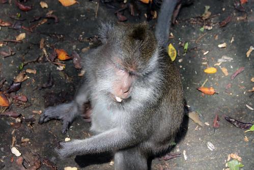 20150224_110055 Pusuk Monkey Forest, Lombok