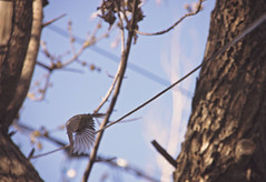 Fly Away (Andrea with a Camera) Tags: trees sky tree bird nature birds fly spring colorado flight project365 3652015