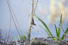 04-18-15-000006135.jpg (Lake Worth) Tags: bird nature birds animal animals canon wings florida wildlife feathers wetlands everglades waterbirds southflorida canonef70200mmf28lisiiusmlens