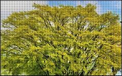 05-03-2015-Art of Nature (Valerie Sauve-Vancouver) Tags: tree green art lush clevelanddam northvancouverbc
