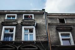 330/365 Gaze (ewitsoe) Tags: 365 ewitsoe nikond80 35mm man window building architecture city citylife cityscape summer street poznan poalnd jezyce europe day sunny warm redshort urban