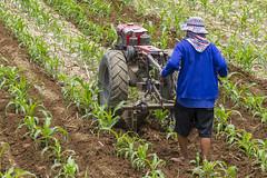 ChiangRai_3651 (JCS75) Tags: canon thailand asia asie chiangrai thailande paysan